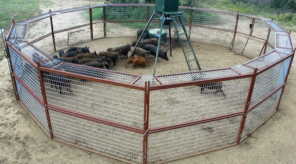 how to build a corral hog trap