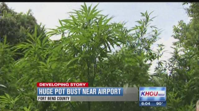A large field of marijuana was discovered off Highway 6 near the Sugar Land Regional Airport.