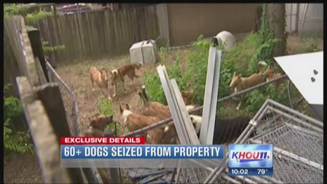 65 dogs seized from property