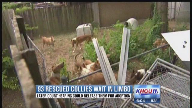 Rescued collies