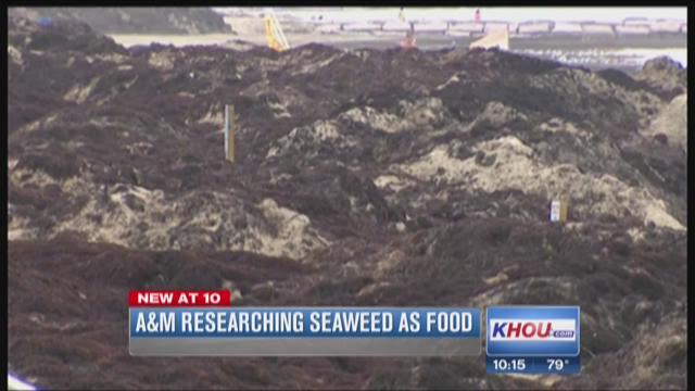 Use for Galveston seaweed