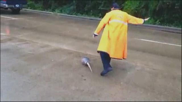 Armadillo gets some help
