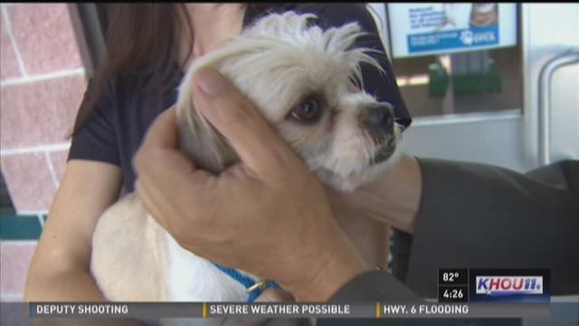 Pet of the Week: Meet Max