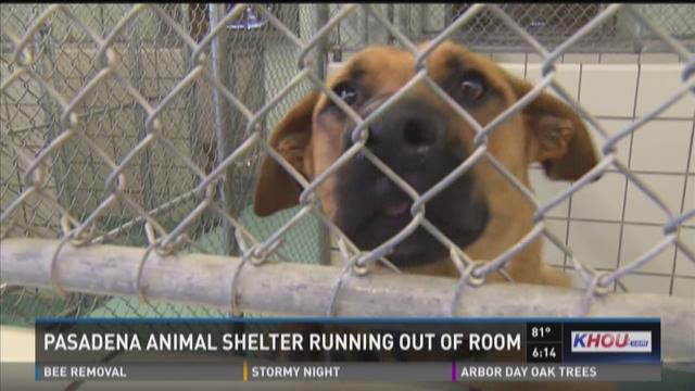 The Pasadena Animal Shelter has been flooded with dogs