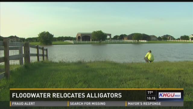 Alligator grabber