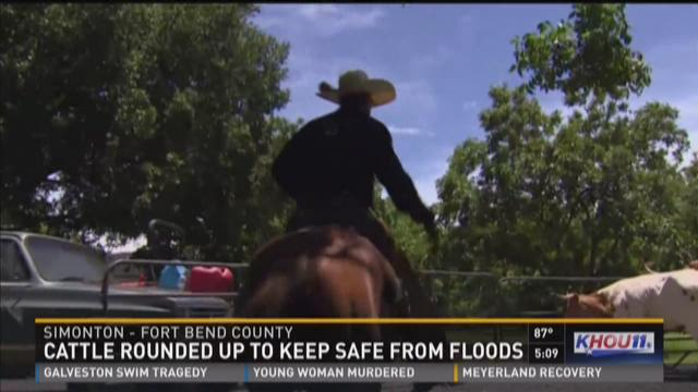 When it comes to saving cattle near a flooded river,