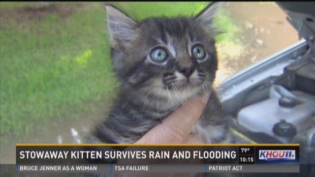 Stowaway kitten survives rain and flooding