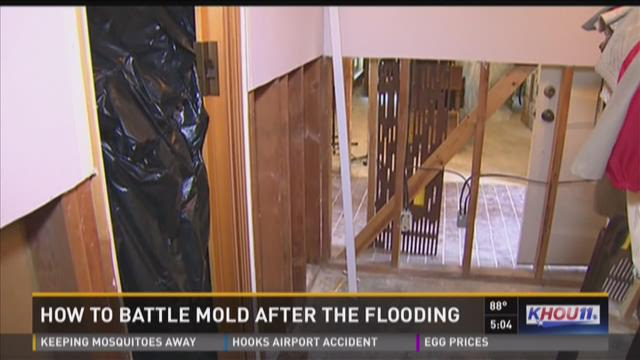 How to battle mold after recent flooding