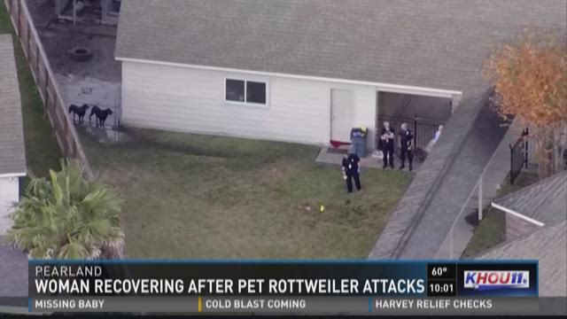 Dogs Bite Decatur Al: PEARLAND TX - A ROTTWEILER ATTACKED A 20-YEAR