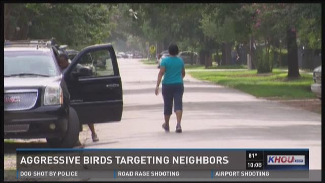 Aggressive birds target, attack neighbors