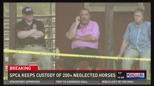 SPCA gets custody of over 200 horses