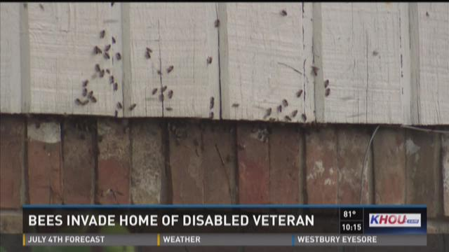 Bees invade home of disabled veteran