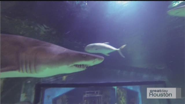 Moody Gardens Shark Week