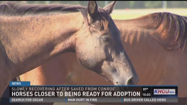 Horses closer to being ready for adoption