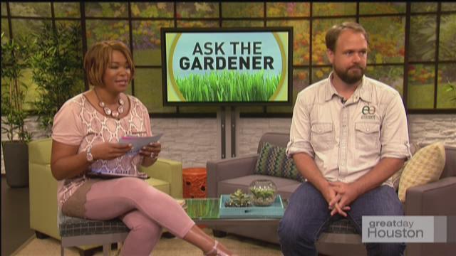 Ask the Gardener