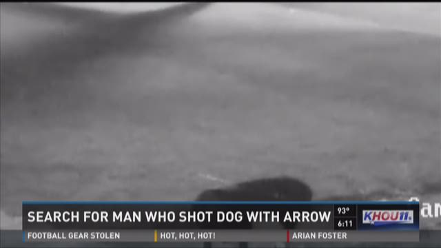 Search for man who shot dog with arrow