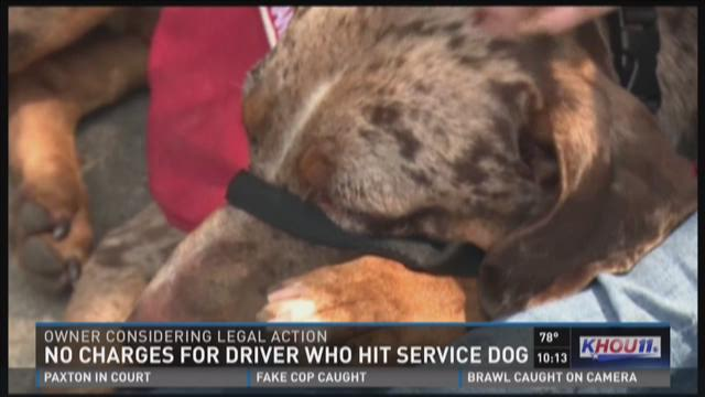 No charges for driver who hit service dog
