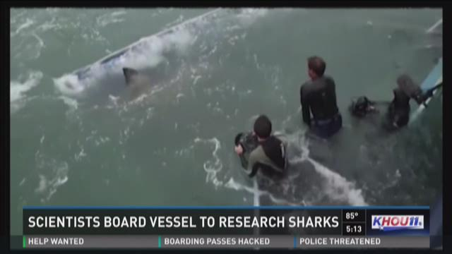 Scientists board vessel to research sharks